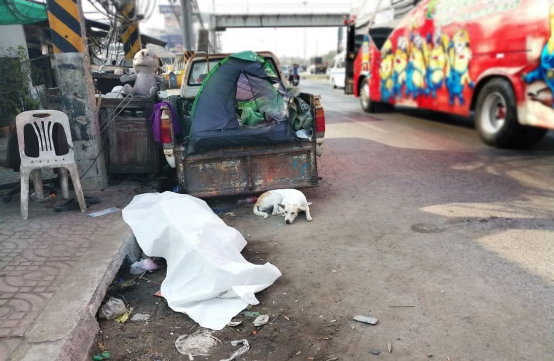 Dog patiently watches over deceased master on Pathum Thani roadside | News by The Thaiger