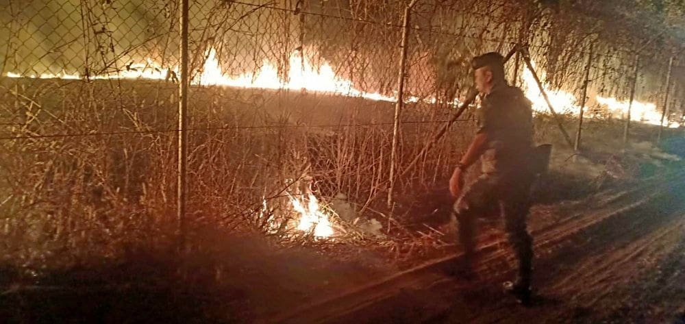 Fears that plantation fire could add to Bangkok pollution woes   News by Thaiger