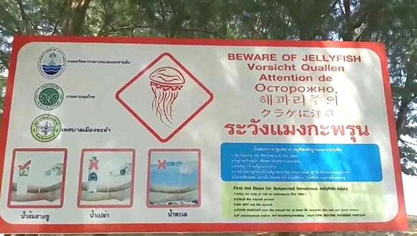 Beware: Dangerous jellyfish. Just don't tell the Chinese. | News by The Thaiger