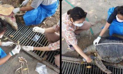 Plastic garbage found inside dead sea turtle in Chon Buri | The Thaiger