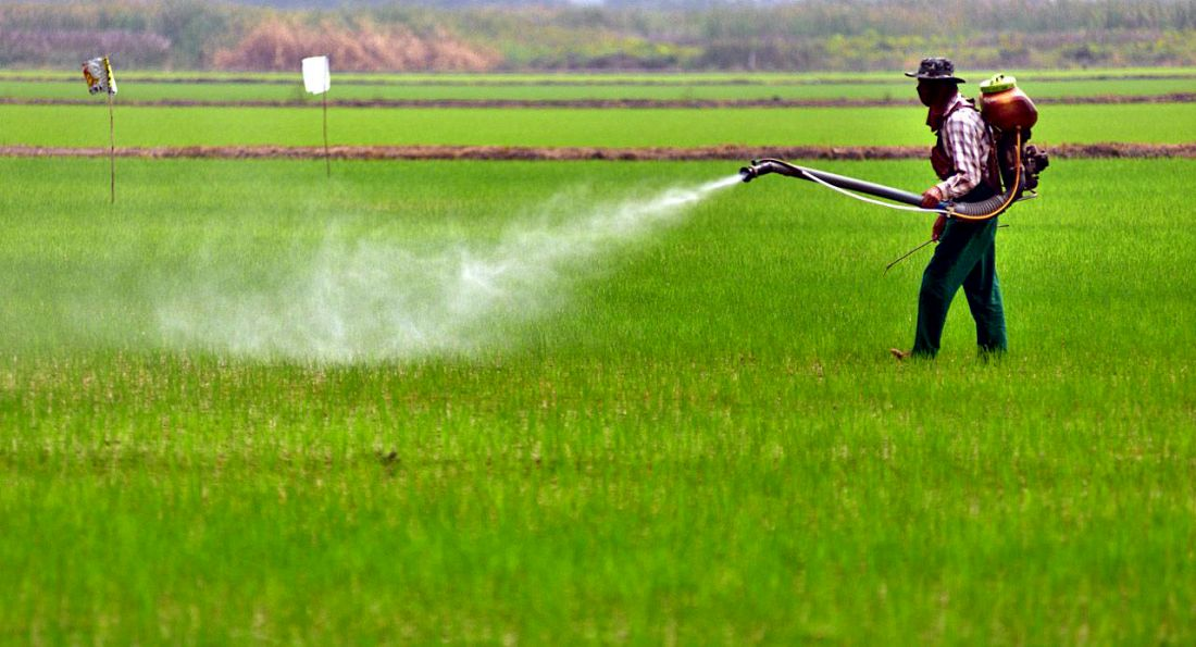 Slow phase out of 'Paraquat' meets resistance | The Thaiger