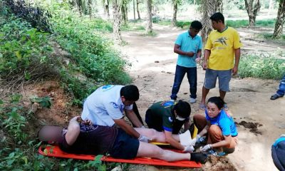 Italian tourists injured in goring attack by bull elephant in Phang Nga park | The Thaiger