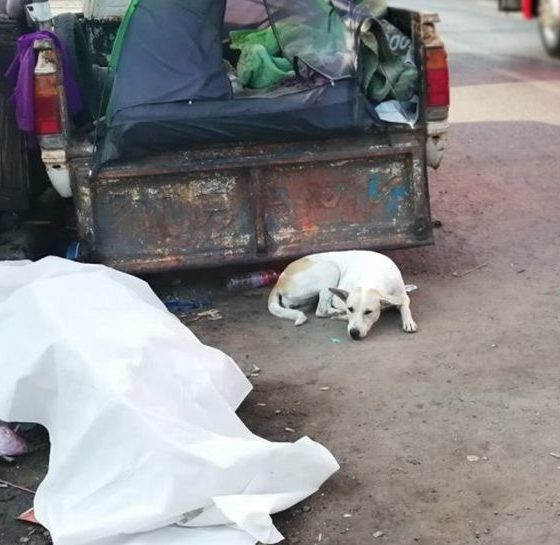 Dog patiently watches over deceased master on Pathum Thani roadside | The Thaiger