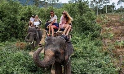 What to do with Thailand's elephants? | The Thaiger