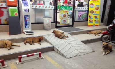 Krabi officials declare a rabies outbreak zone | The Thaiger