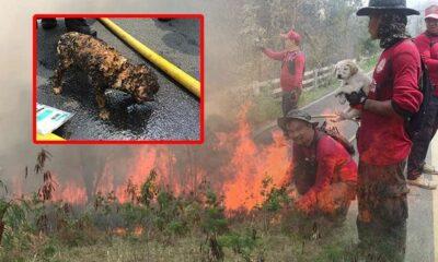 น่าสงสาร! ภาพหมาน้อยถูกไฟไหม้เกรียม โชคดีหน้าที่ช่วยออกจากกองไฟป่าได้ทัน | The Thaiger