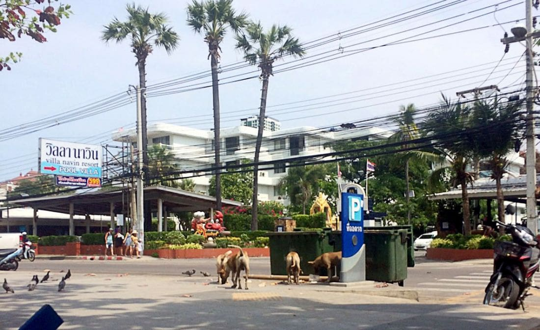 Stray dogs to be rounded up on Jomtien Beach | The Thaiger