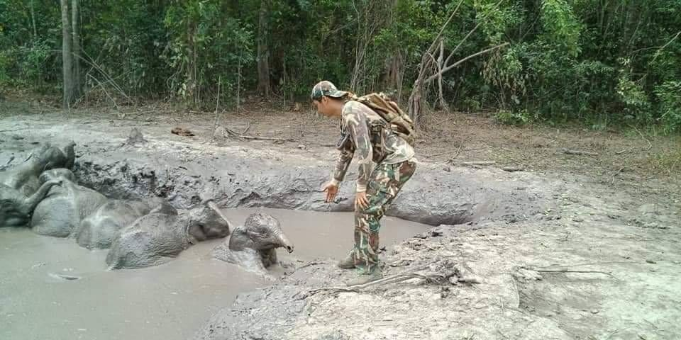 Two day rescue of six baby elephants stuck in mud pool in Nakhon Ratchasima – VIDEO | The Thaiger
