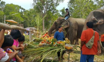 Krabi celebrates National Elephant Day | The Thaiger