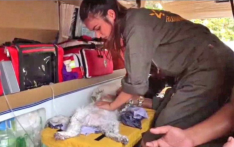 Persian cats perish in Bangkok apartment fire | The Thaiger