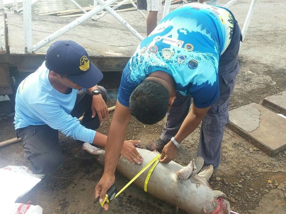 Dead dugong washed up on Trang Beach | News by The Thaiger