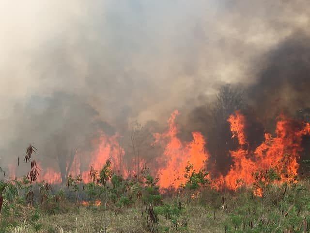 น่าสงสาร! ภาพหมาน้อยถูกไฟไหม้เกรียม โชคดีหน้าที่ช่วยออกจากกองไฟป่าได้ทัน | News by The Thaiger