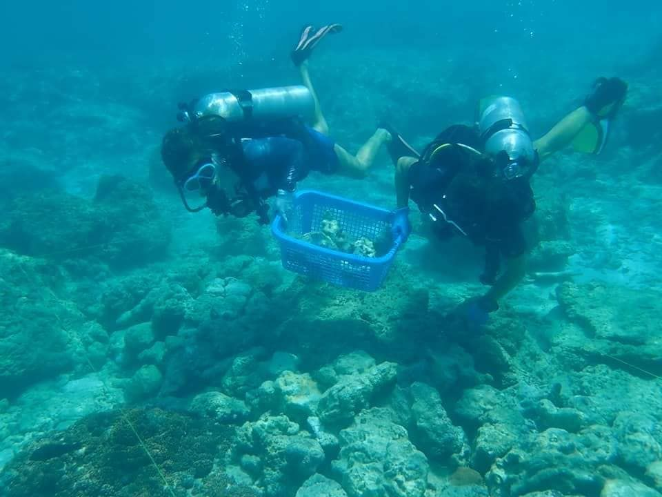 Maya Bay rehabilitation: Volunteer divers needed | News by The Thaiger