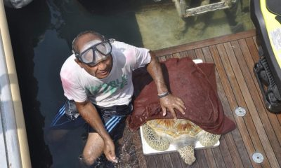 Sea turtle saved after eating fishing net and plastic off Pattaya coast | The Thaiger