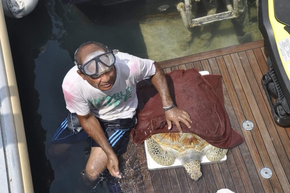 Sea turtle saved after eating fishing net and plastic off Pattaya coast   The Thaiger