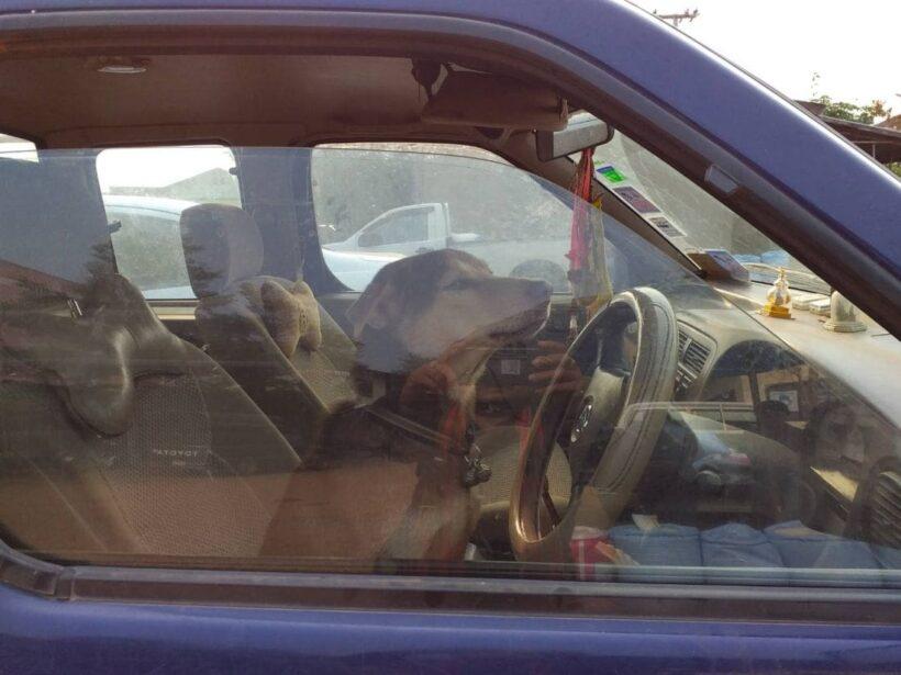 น้องไม่ได้ตั้งใจ! ตูบจอมซน ปลดเกียร์ว่างทำรถไหล ชนเก๋งยุบ เจ้าของเครียดจ่ายค่าเสียหาย | News by The Thaiger