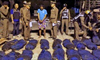 76 Pangolins intercepted in Prachuap Khiri Khan | The Thaiger