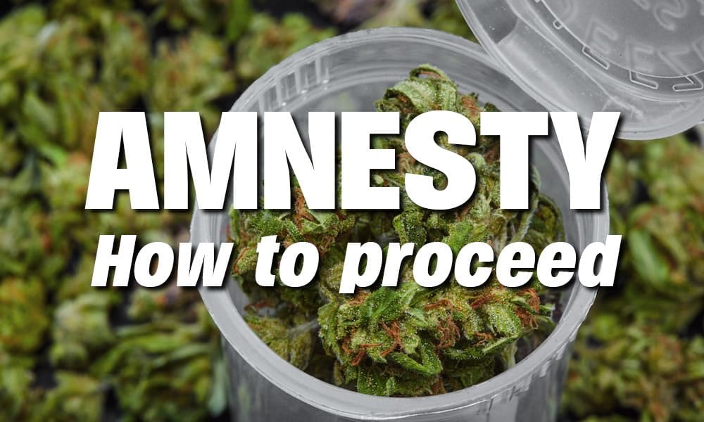 The marijuana amnesty. What does it mean and how can I apply? | The Thaiger