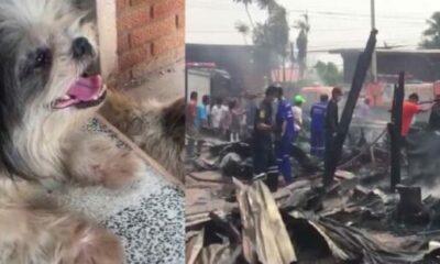 ไฟไหม้บ้าน หมาชิสุน้อยกตัญญู ห่วงเจ้าของวัย 77 วิ่งเข้ากองเพลิง ถูกไฟคลอกตาย | The Thaiger