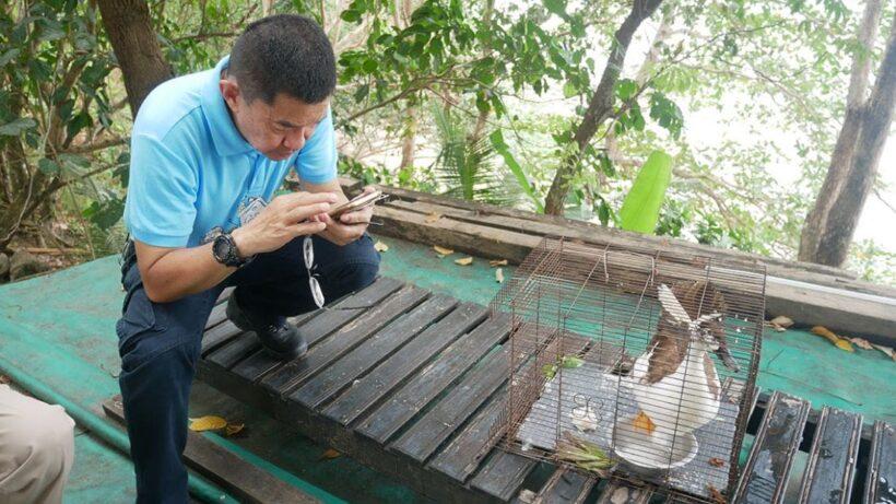 พบนกเป็นหงส์หายาก อาการร่อแร่ คาดบินหลงฝูงมาจากประเทศเพื่อนบ้าน | News by The Thaiger
