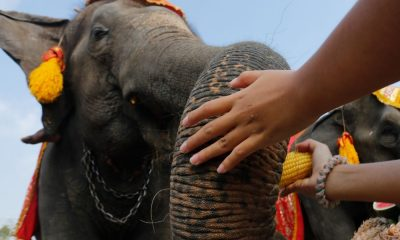 Happy National Elephant Day – March 13 | The Thaiger