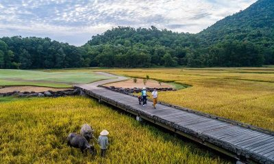 A family of three grooms Vietnam's most edible golf course | The Thaiger