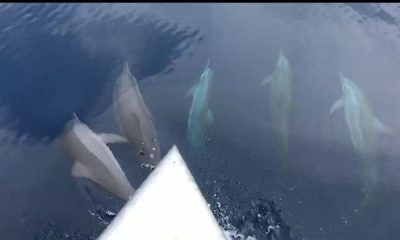 Dolphins playing off Phang Nga – VIDEO | The Thaiger
