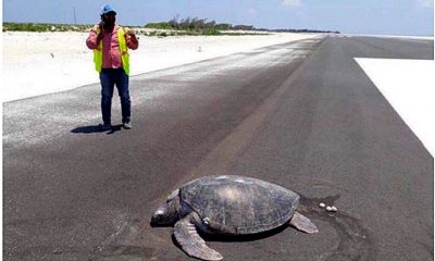 Sea turtle returns to its nesting place – it's now an airport! | Thaiger