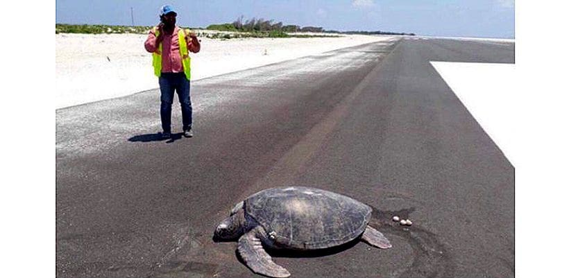 Sea turtle returns to its nesting place – it's now an airport! | The Thaiger
