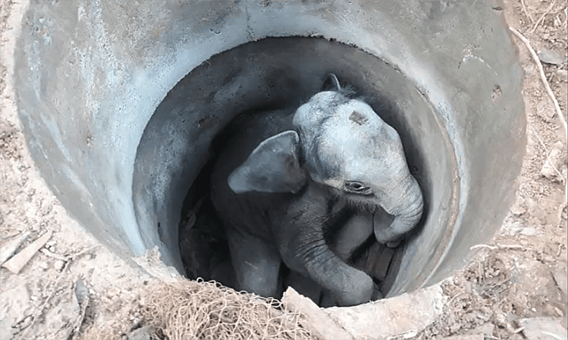Baby elephant rescued from unused drain in far north-east Thailand | News by Thaiger