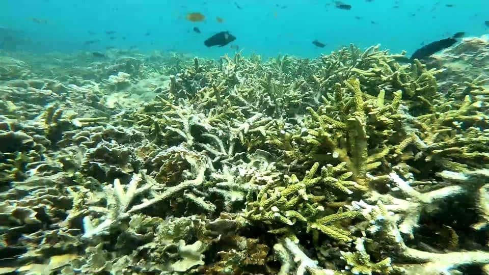 Coral in Trang extensively damaged after tourist influx over Songkran | The Thaiger