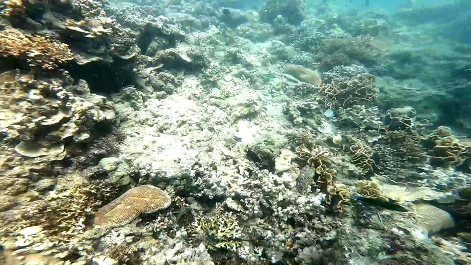 Coral in Trang extensively damaged after tourist influx over Songkran | News by The Thaiger