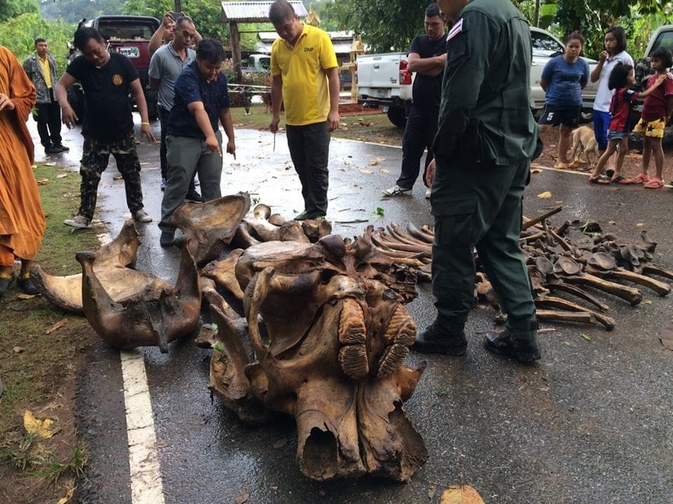 56 elephant skeleton fragments found in a Chon Buri mine   News by Thaiger