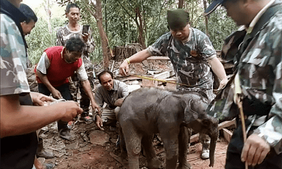 Baby elephant rescued from unused drain in far north-east Thailand | The Thaiger