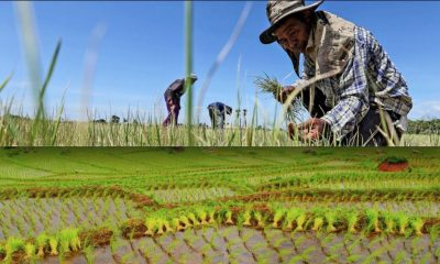 Forecast drought will weaken the Thai economy | The Thaiger