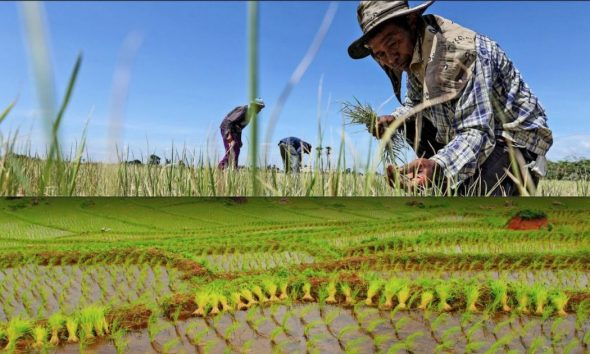 Forecast drought will weaken the Thai economy   The Thaiger