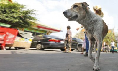 Surin man first to die of Rabies in 2019 | The Thaiger