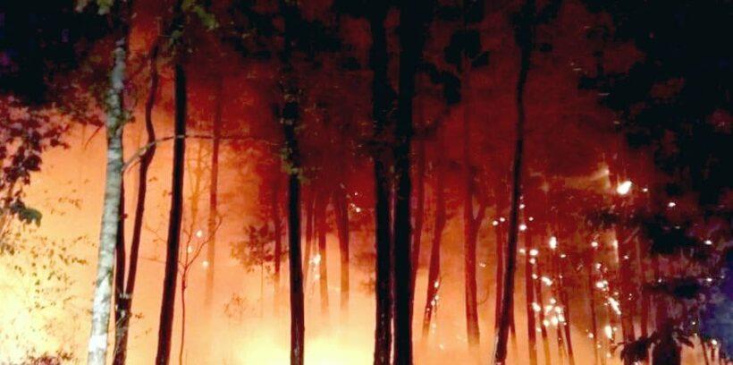 จับคนเผาป่าภาคเหนือได้แล้ว 176 คน รวม 9 จังหวัด | The Thaiger