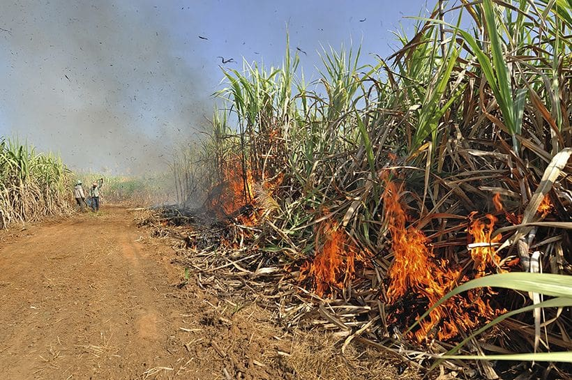 Ministry works towards ending sugarcane burning in three years | The Thaiger
