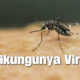 Update on Chikungunya cases in Thailand | The Thaiger