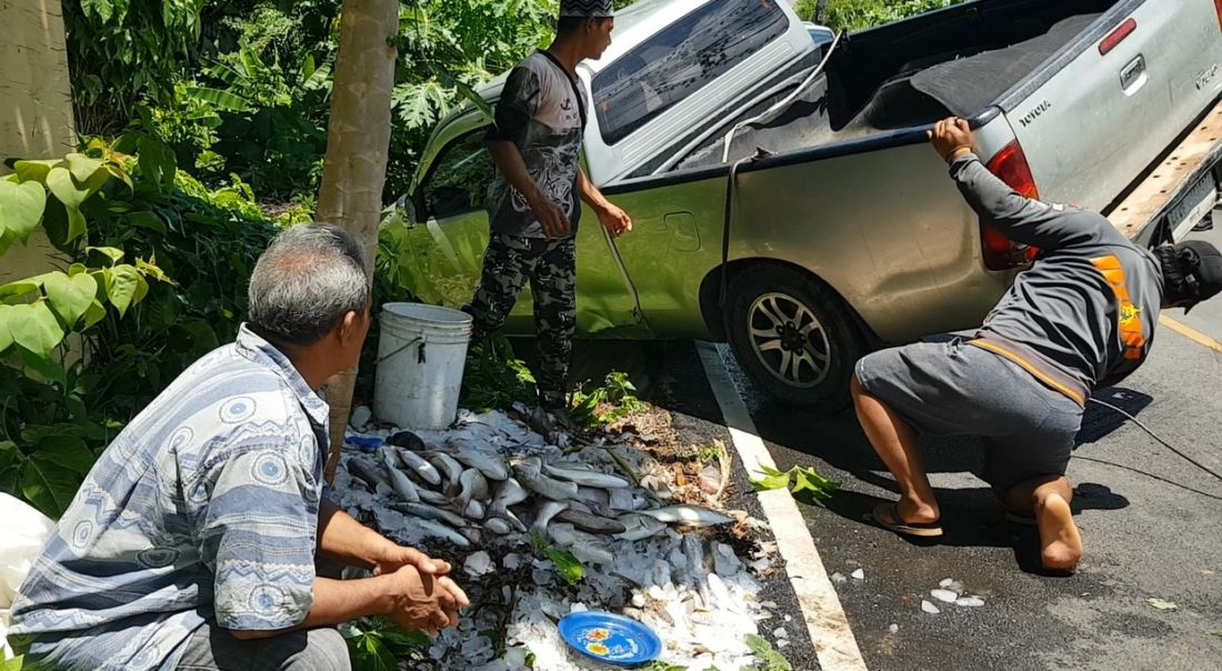 Six survive after fish delivery pick-up overturns in Krabi | News by The Thaiger