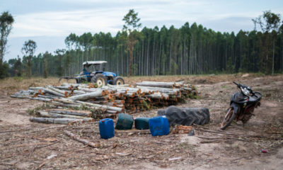 Harsher penalties for encroachers and illegal loggers in Thai forestry areas | The Thaiger