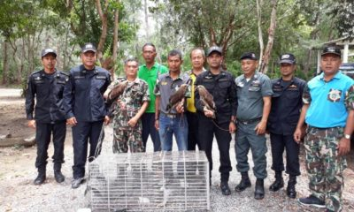 Man arrested for raising protected Red-backed Sea Eagles in Krabi | Thaiger