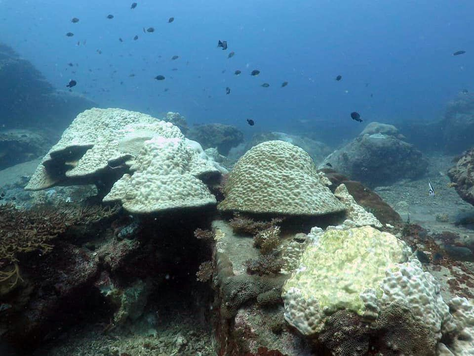 Corals bleaching off Pattani | The Thaiger