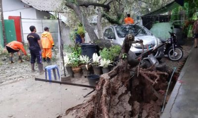 Large tree crashes onto car in Chalong | The Thaiger