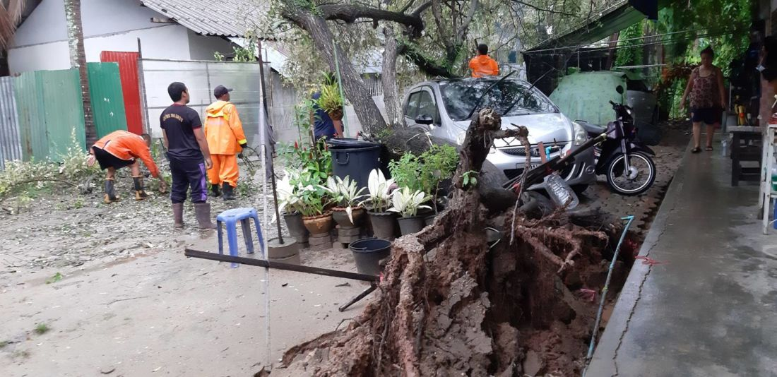 Large tree crashes onto car in Chalong   The Thaiger