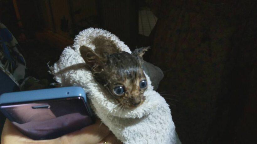 ทุบฝาท่อระบายน้ำ มุดช่วยลูกแมวน้อย เจ้าของบ้านสุดดีใจ รับเลี้ยงตั้งชื่อเจ้า LUCKY   News by The Thaiger