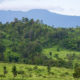 Remote Karen tribesman flown from western jungle to hospital for emergency surgery | The Thaiger