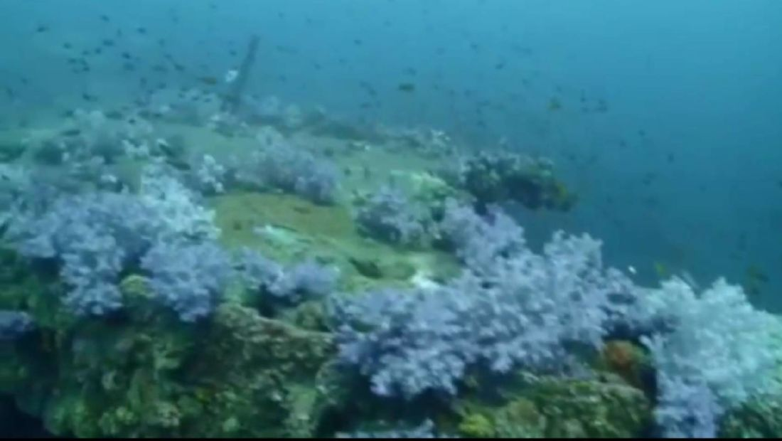 Coral bleaching off Koh Phi Phi   News by Thaiger