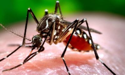 'ไข้เลือดออก' ระบาดหนัก ป่วยกว่า 2 หมื่น ตายแล้ว 25 ราย – วิธีป้องกันโรคไข้เลือดออก | The Thaiger